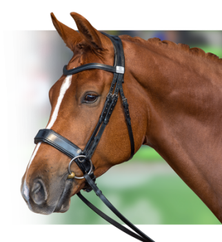 the-fairfax-performance-bridle